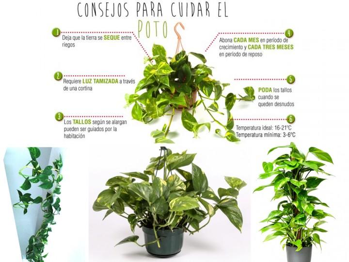 La mejor decoración de oficinas con plantas