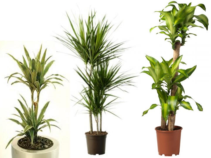 La mejor decoraci n de oficinas con plantas for Plantas para oficina