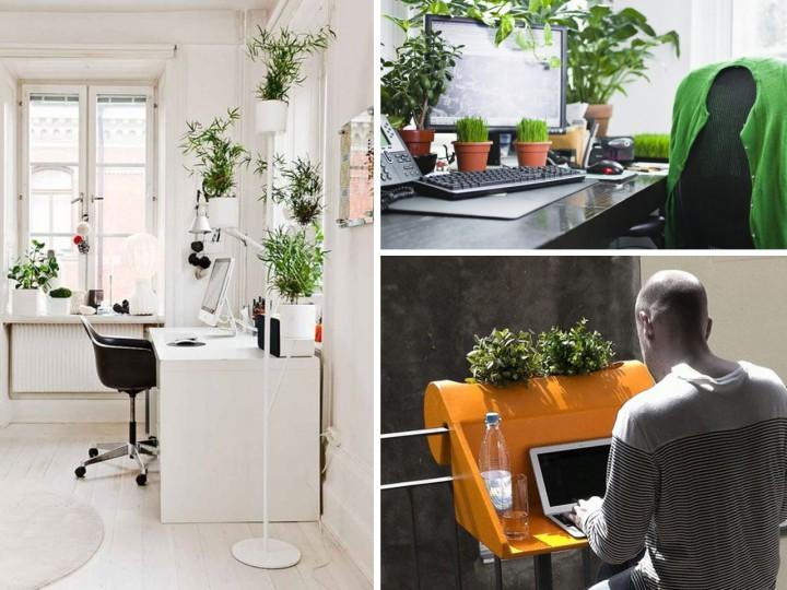 La mejor decoraci n de oficinas con plantas for Arreglos para escritorios oficina
