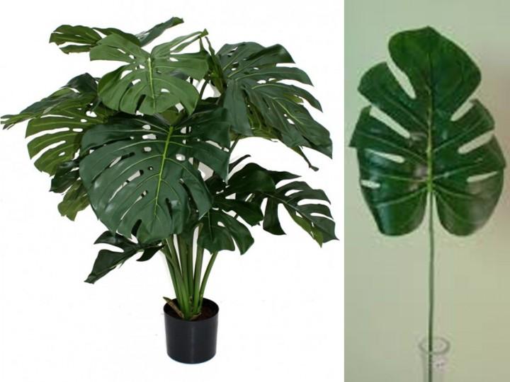 plantas costilla de Adán
