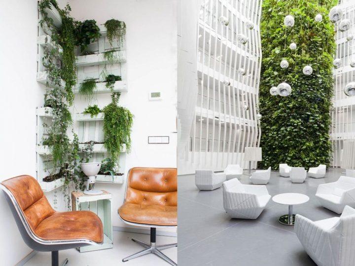 plantas en salas de espera