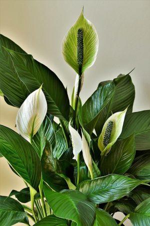 mejores plantas para oficina